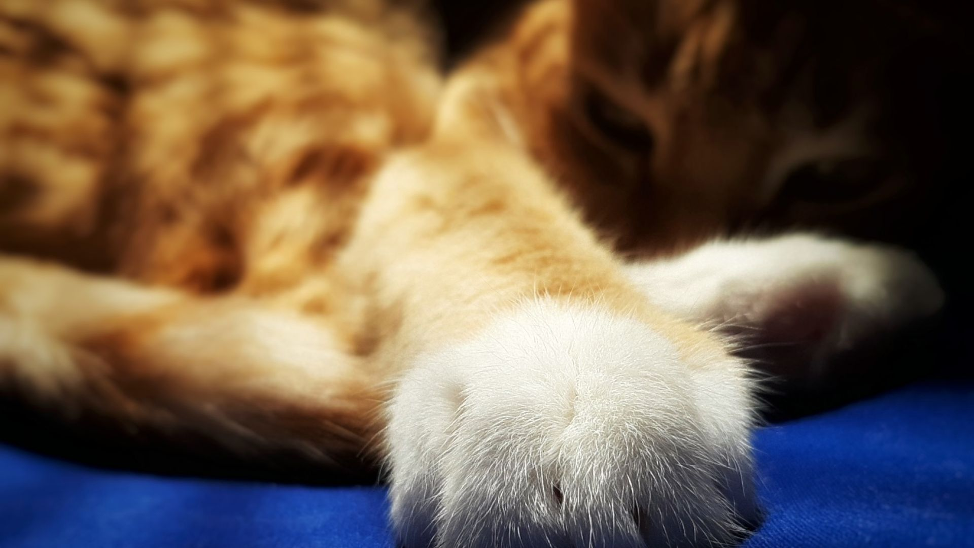 Fluffy Paws